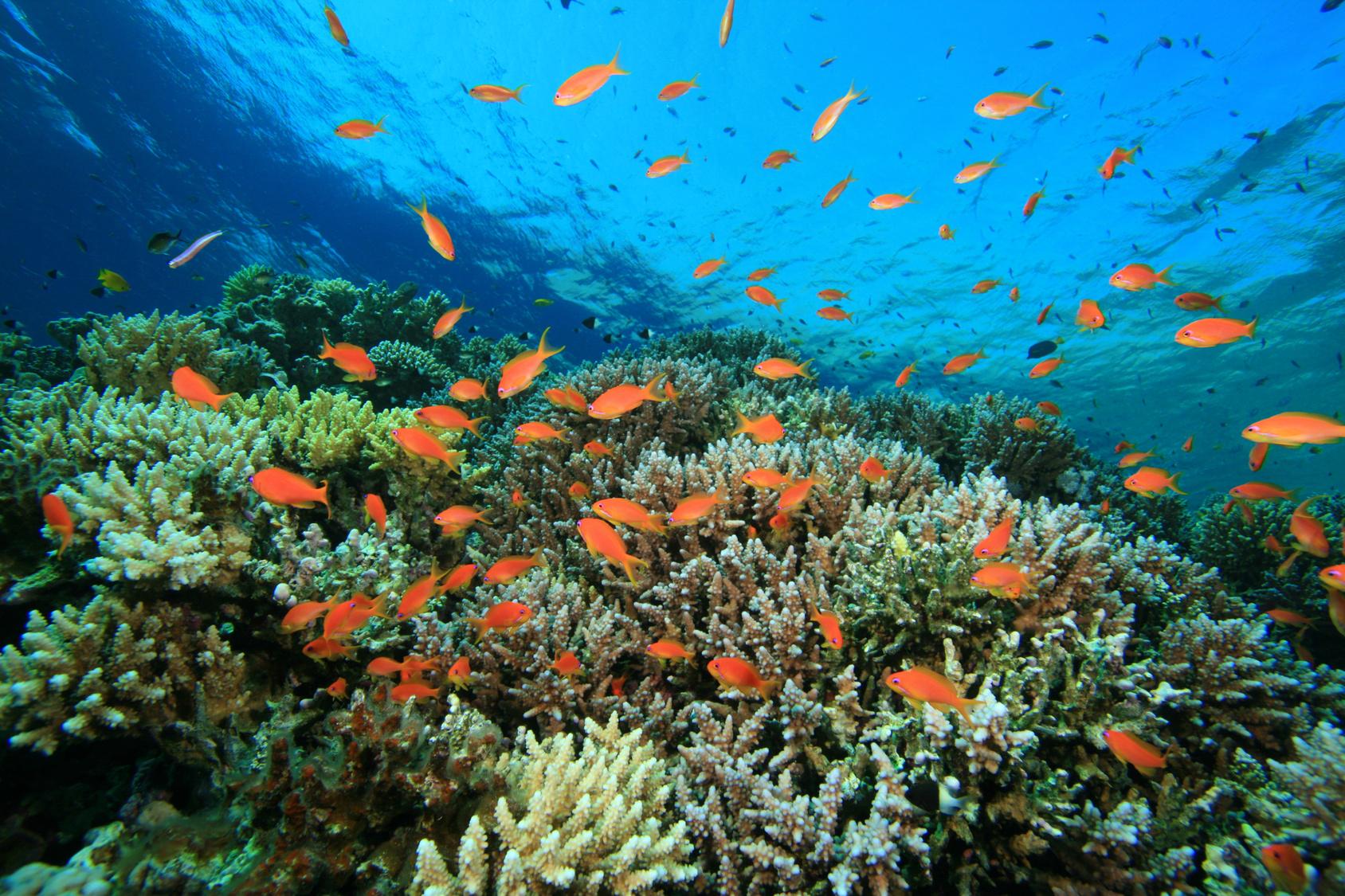 Risultati immagini per nosy tanikely snorkeling